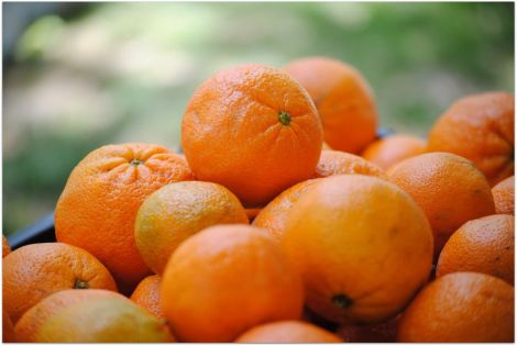 farmers-market-oranges-small